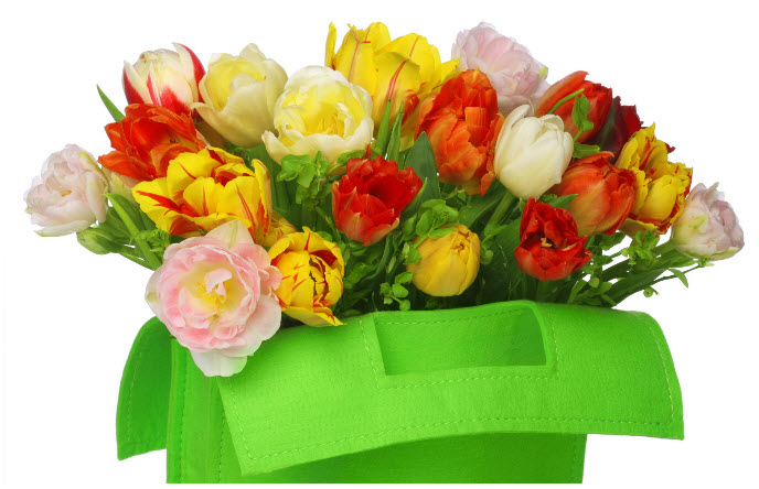 Купить Цветы