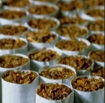 Купить Табак рассада