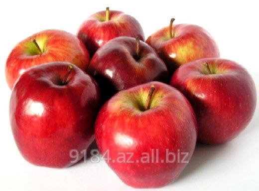 Купить Яблоки