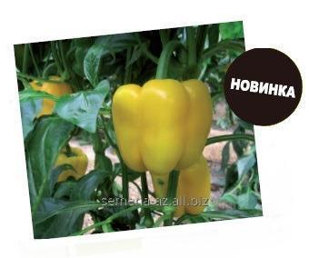 Купить Семена томата Спрингбок F1