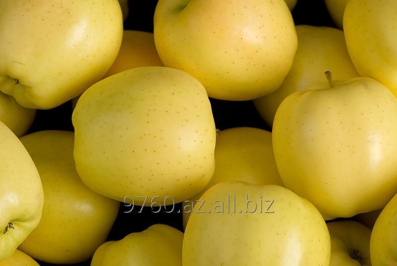 Купить Яблоко голден делишес - калибр 65+