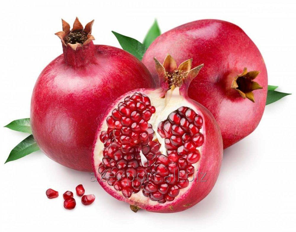 Купить Pomagranate