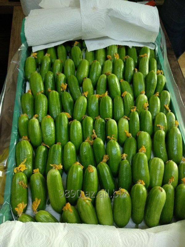 Купить Огурцы сорт шумал
