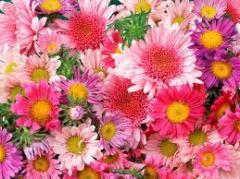 Цветы живые