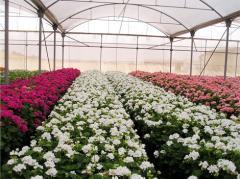 Greenhouse, İstixana, hotbed