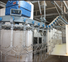 Complex installations for slaughter and processing