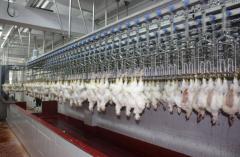 Оборудование для переработки птицы
