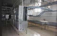 Линии и оборудование по убою и переработке птиц