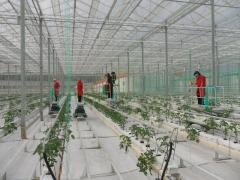 Modern glass hothouse systems