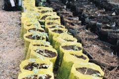 Биосмесь - почва для растений (почвосмеси)
