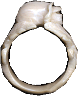 Ring from a mammoth tusk