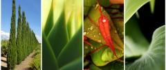 Dekorativ bitkilər