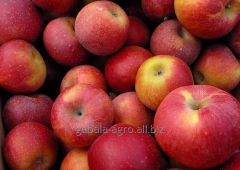Яблоки красные (Иран)