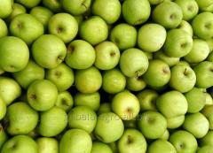 Apples green (Iran)