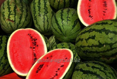 Water-melon from Iran FCA, types of deliveries of