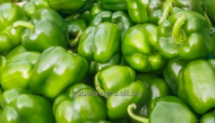 Pepper green of Iran, types of deliveries of FCA,