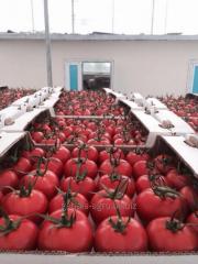Tomat (pătlăgele) proaspete
