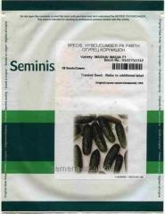 Семена огурца Маша F1 компании Семинис