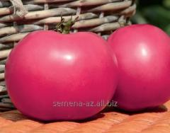 Tomato tall Afen F1