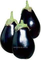 Seeds of eggplant of Galine of F1