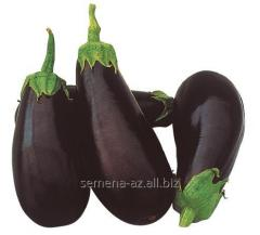 Eggplant seeds Classic of F1