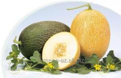 Melon seeds F1(Caramel F1) Caramel