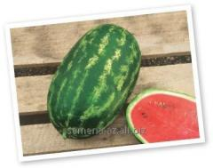 Watermelon seeds Nelson F1