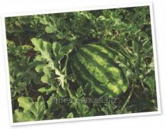 Water-melon seeds Krimson Svi