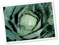 Семена капусты белокачанной Сир F1