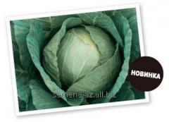 Семена капусты белокачанной Потомак F1
