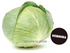 Seeds of cabbage of white Kaporal of F1
