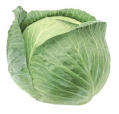 Seeds of cabbage of white Zheant of F1