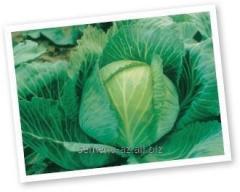 Семена капусты белокачанной Бригадир F1