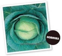 Seeds of cabbage white Scythian of F1