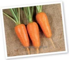 Семена моркови Болтекс