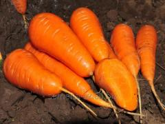 Семена моркови Шантанэ Редкор