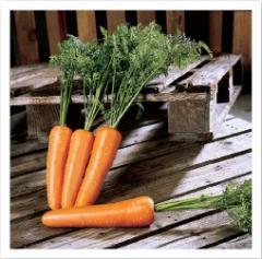 Семена моркови Виго F1