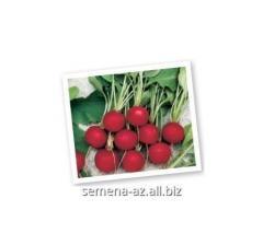 Seeds of a garden radish of Jolie
