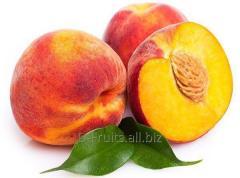 Выращиваем и поставляем восемь сортов персика.