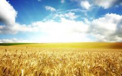 Зерно с Казахстана