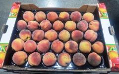 Персик сорт Красный Федаи