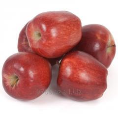 Яблоко ред делишес - калибр 65+
