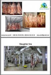 Мясо боранины
