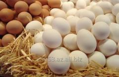 Куринное яицо