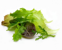 Bebi livz (Lettuce Baby leaves)