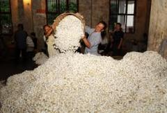 Production of cocoons