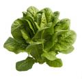 Kos (Lettuce Cos)
