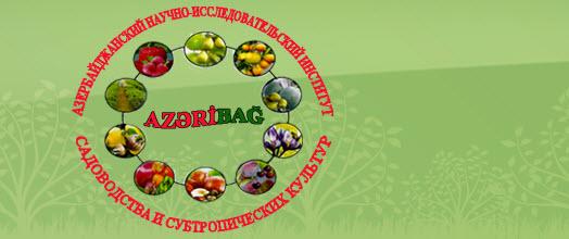 Azeribag, Азербайджанский Научно-исследовательский Институт Садоводства и Субтропических Растений, Губа