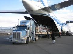Order Air transportation of dangerous and large-size freights