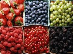 Processing of berries